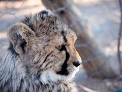 P1118558-LR (carlo) Tags: panasonic g9 dmcg9 africa africanlandscape namibia keetmanschoop