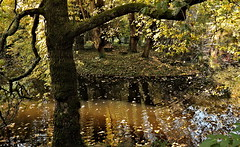 Change (Behappyaveiro) Tags: autumn autumncolours autumnleaves outono coresoutono folhas folhasdooutono leaves porto serralves portugal europa europe water pond mistery light tree log reflexos reflections change
