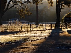 Sepia Shadows (Nanny Bean) Tags: fence friday wroughtiron sepia shadows frost