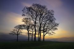 Sunset in Skipton (Pawel Skokowski) Tags: sunset trees skipton landscape fineart finelandscape sky grass view nature beautiful longexposure england yorkshire