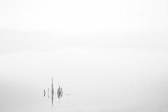 Foggy (burgerno) Tags: fujifilmxt1 fujifilm fuji xt1 helios442 helios fog skjellbreia bymarka trondheim norway norge norja bw minimal minimalistic lake water landscape