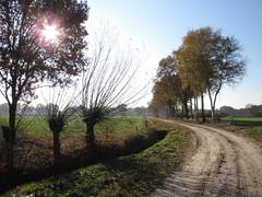 IMG_8934 (Momo1435) Tags: eindhoven brabant waalre herfst herfstkleuren netherlands autumn fall colors