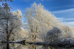 University Parks, Oxford (saffron100_uk) Tags: oxford universityparks frost hoarfrost aerialfrost nikon d3 oxfordshire landscape winter pictorial trees cold freezing water bridge sky clouds