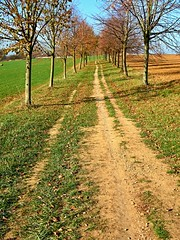 The path between fields (Yirka51) Tags: treetrunk tree traveling tourism stone shadow pathway path nature meadow leaves leaf landscape grass footpath flora field farming fall countryside country autumn alley agriculture