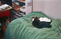 (Chris Hester) Tags: 65 137p baildon cats bed