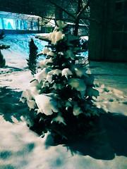 Kuusi (msergeevna) Tags: winter prestigio snow tree talvi lumi spruce kuusi зима ель январь снег