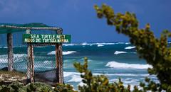 Save the Turtles (_ineil) Tags: seaturtles seashore beach turtles sealife shore coast