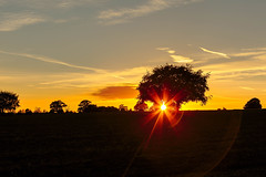 The Sun - a reminder (microwyred) Tags: forestwoods landscape sunset nature scenics ruralscene beautyinnature dusk agriculture sun summer silhouette tree orangecolor sky sunrisedawn landscapes sunlight outdoors yellow backlit field