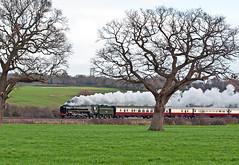 just a glimpse (midcheshireman) Tags: steam train locomotive railway 70000 britannia mainline