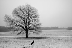 the dog waits patiently for the photographer - in the FRAME (felipe bosolito) Tags: tree dog solitude single winter snow waiting fuji xt20 xf14f28 acros blackandwhite blackwhite bw