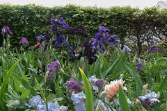 Richmond (Heart felt) Tags: spring newzealand wairarapa gardens richmondgarden carterton tepuhigarden featherston oldtablelands martinborough pukahagardentour sadie hugo nature