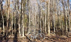 2018 Bike 180: Day 180 - 180! (mcfeelion) Tags: cycling bike bicycle autumn foliage annandaleva crosscountytrail cct eakinpark bike180 2018bike180