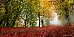 Sublime autumn (Mavroudakis Fotis) Tags: forest dreamscape autumn woods trees vivid foliage lush nature rays outdoors path road trunk colorful yellow greece europe destination traveling hikking mountain leaves