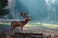 DSCF3402 (Kam_!) Tags: xt2 fuji fujifilm woods fall animal 56mm apd
