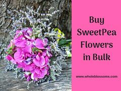 Buy Sweet Pea Flowers in Bulk (wholeblossoms1234) Tags: sweetpeaflower pinksweetpea whitesweetpea sweetpeacolors sweetpeabouquet
