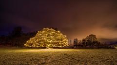IMGP0375-Edit (jarle.kvam) Tags: christmas jul noél light tree