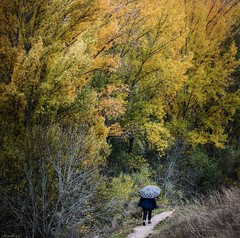 deep into the forest (dedic. to Marian) (*BegoñaCL) Tags: forest autumn people 1 tree wood leaf path begoñacl