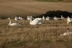 IMG_4818 (monika.carrie) Tags: monikacarrie wildlife scotland