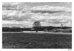 All alone (Aljaž Anžič Tuna) Tags: tree alone bog marshes barje ljubljana grass grassland clouds cloudysky sky photo365 project365 panorama onephotoaday onceaday 365 35mm 365challenge 365project nikond800 nikkor nice naturallight nikon nature nikon105mmf28 f28 field d800 dailyphoto day landscape bw blackandwhite black white blackwhite beautiful