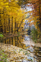 Fall Reflections (maxinneball) Tags: reflections fall leaves golden stream landscape water trees