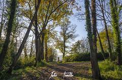 _DSC0066 (Julio Tomillo) Tags: nikond5100 naturaleza nature bosque forest árbol tree paisaje lancaspe otoño autumn asturias lightroom