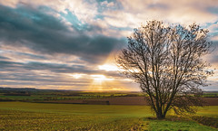 Winter Tree.jpg (cabalvoid) Tags: lincoln sky landscape sunset evening