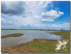 Skyline Yala (UfoSp@in ஐ★Freelance Photo★ஐ) Tags: srilanka landscape lalágrimadelaindia haputhale canoneos5dmarkii canoneosm50 1635l yalanationalpark elephant ñu bambi pavo water walk travel treasure texturas traveling texture reflections road libelula dragonfly colors wadduwa weligama yala asia oceania unesco tower ceilandes wilpattu cachimba cocodrilo market shop photoshop photography photo pueblos paisajes stone skyline clouds best bokeh mac macbookpro art exposure retoques topaz portrait paint people square explore zoom light luz live lightroom lens love sun arboles pesca temple lago lake aves birds rice espiga