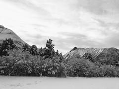 Vinterskog -|- Winter forest (erlingsi) Tags: erlingsi iphone erlingsivertsen