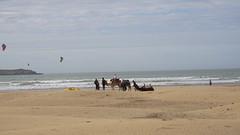 2016-01-08_14-40-00_ILCE-6000_DSC02676 (Miguel Discart (Photos Vrac)) Tags: 2016 75mm animal animalphotography animals animalsupclose animaux beach citytrip epz1650mmf3556oss essaouira focallength75mm focallengthin35mmformat75mm holiday ilce6000 iso100 landscape maroc meteo morocco nature naturephotography panorama plage sony sonyilce6000 sonyilce6000epz1650mmf3556oss sport travel vacance vacances voyage weather