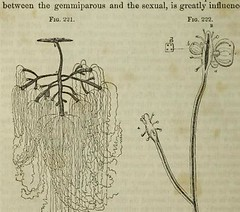 This image is taken from Page 460 of The microscope: and its revelations (Medical Heritage Library, Inc.) Tags: microscopy natural history wellcomelibrary ukmhl medicalheritagelibrary europeanlibraries date1856 idb28136974