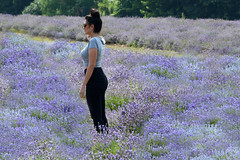 Contemplation (kodakid18) Tags: lavender lavenderfields women fields nature flowers outdoors womenflowers lavande lavandula lavanda bokeh landscape hof