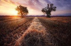 La distance qui sépare. (jonathan le borgne) Tags: lavander lavande flower trees sky arbres ciel nuages clouds sunset coucherdesoleil light lumière wheat summer blé field champ valensole france soleil sun colors red orange purple yellow landscape nature