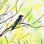 Salt Marsh Bird thumbnail