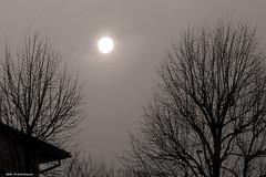 back light (Paolo Bonassin) Tags: italy emiliaromagna salabolognese bw backlight conroluce fog nebbia
