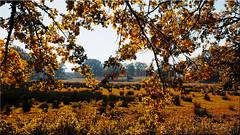 Autumn landscape near Bad Bevensen (Ostseetroll) Tags: badbevensen deu deutschland geo:lat=5306097427 geo:lon=1058847516 geotagged kleinbünstorferheide niedersachsen herbstlandschaft autumnlandscape herbst autumn lüneburgerheide lüneburgheath olympus m10markii