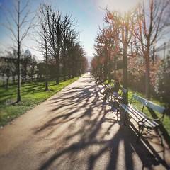 VOLKSGARTEN - VIENNA (VINCENT MOYASHI) Tags: vienna light tree trees citylife city shadow austria europe sunlight cold park