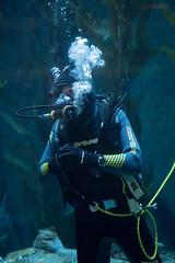 Diver. (LisaDiazPhotos) Tags: aquarium pacific diver lisadiazphotos