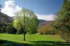 Sheltered Valley (davidpemberton78) Tags: landscape scenery tree autumn lamontagnenoire albine tarn sunlight shadow