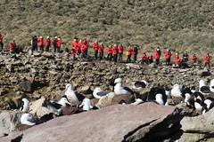 2018-102759 (bubbahop) Tags: 2018 antarcticatrip falklandislands newisland hike bird animal albatross