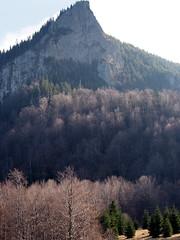 csendes már az erdő alja / the forest is still quiet (debreczeniemoke) Tags: ősz autumn túra hiking hegy mountain gutin erdély transilvania transylvania táj land tájkép landscape kakastaréj creastacocoşului csúcs peak erdő forest fa tree olympusem5