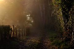 La clôture — Perche, octobre 2018 (Stéphane Bily) Tags: stéphanebily perche orne bretoncelles chemin path france fence barrière clôture light morning matin campagne countryside