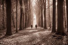 Autumn walk - Herfstwandeling (de_frakke) Tags: landscape wood mollendaal autumn herfst landscap bos