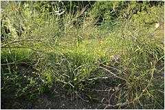 anselmo 96 (beauty of all things) Tags: italien toskana montespertoli anselmo flora green grün