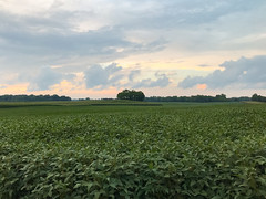 Soybean Field at Dusk (traceyellen) Tags: field farm soybeans crop rural clouds sky dusk sunset lush green summer countryside