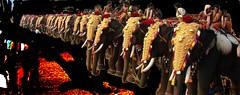Festival Elephant Png #BharathiVfc (bharathivfc) Tags: png transparent festival elephant function