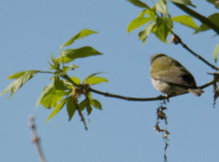 Horicon Marsh Bird Festival 2018 (turn off your computer and go outside) Tags: 2018birdfestival birdingtheoldmarshroad horiconmarshnwr may wi wisconsin nature outdoors overcastday spring