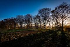 Shadowplay (Phil-Gregory) Tags: trees shadows sheffield ridgeway mosborough mossvalley southyorkshire nikon d7200 tokina tokina1120mmatx 1120mmproatx11 1120mmproatx 1120mmf2811 1120prodx light lightroom sunset field countryside scenicsnotjustlandscapes