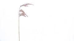 Negative space (Anders Bromell) Tags: fs190127 negativyta fotosondag negativespace minimalistisk minimalist