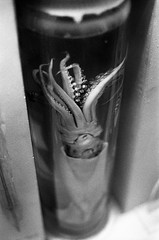 Squid (DanRSmith) Tags: bw blackandwhite light kentmere400 kodakd76 canoneos30 35mm canon50mmf18