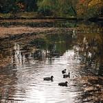morton's pond thumbnail